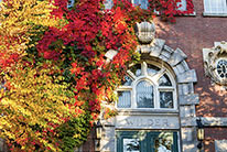 A tree showing Fall colors in front of a building at Dartmouth